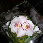 2 Cymbidium Orchids in a square vase - From $25.00 and up