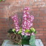 Cymbidium Orchids Arrangement - $250.00